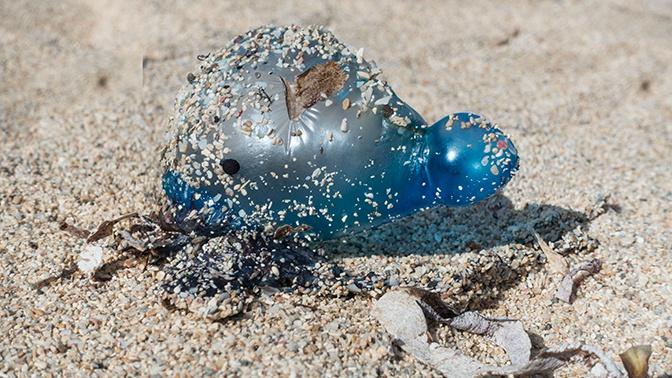 Сотни ядовитых медуз атаковали пляжи Канарских островов