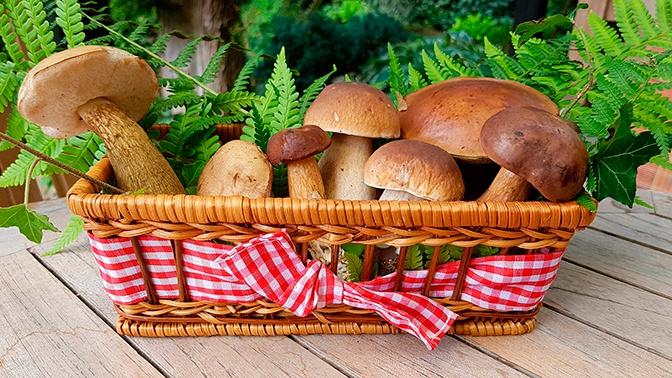 В МЧС рассказали, как правильно собирать грибы