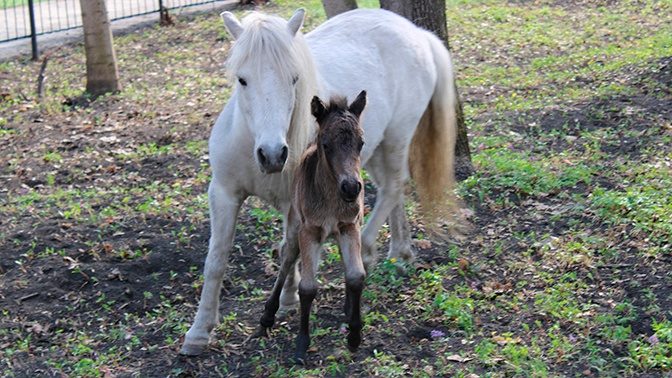 Посетители до смерти закормили пони в зоопарке Пензы