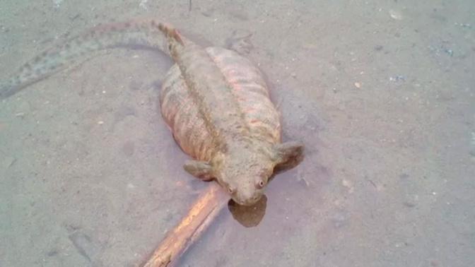 Загадочную «личинку Лунтика» выловили рыбаки из Оби