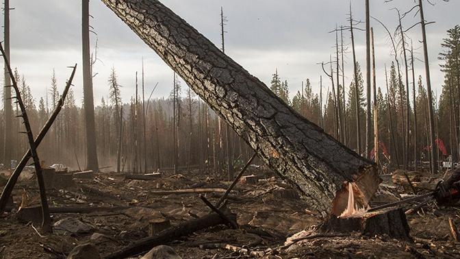 Медведев пообещал проанализировать возможную связь незаконных рубок леса с природными пожарами