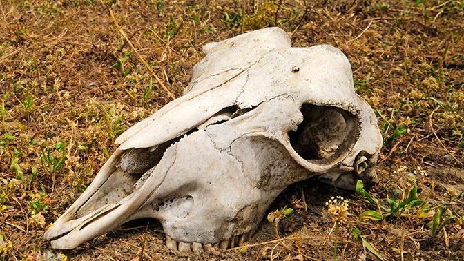 Душераздирающее зрелище: тонны костей и черепов обнаружили в лесу жители омской деревни