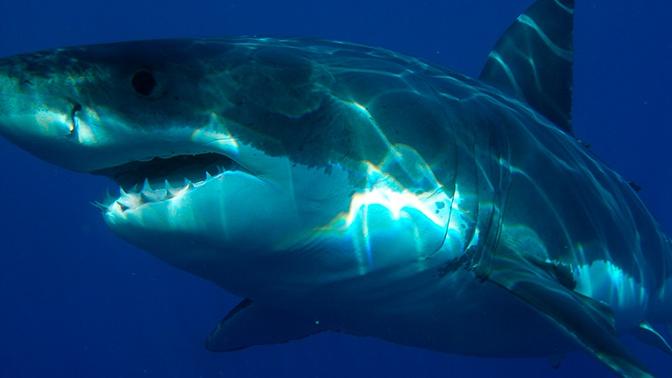 Самая смертоносная атака акул: СМИ рассказали о нападении хищников на крейсер ВМС США
