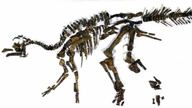 Сенсационная находка: в Японии обнаружили останки нового вида динозавров