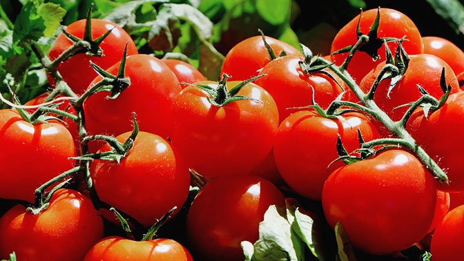 Кардиолог рассказал о вреде помидоров