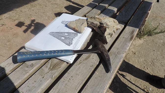 В России обнаружили останки первого вышедшего на сушу позвоночного