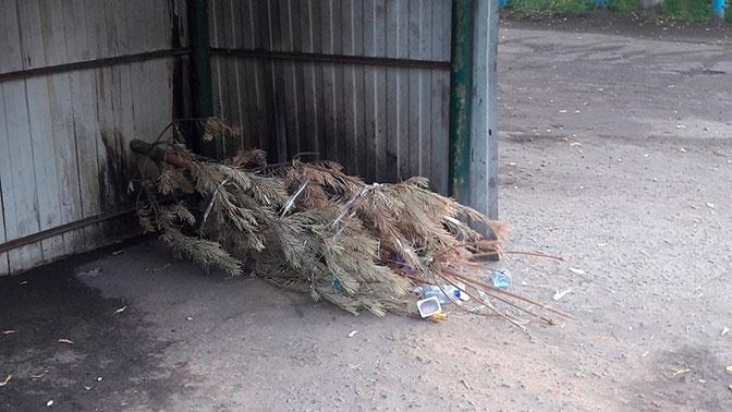 Последний сдался: житель Омска выкинул новогоднюю ель в сентябре