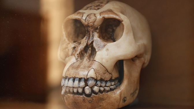 Ученые опровергли известную гипотезу об эволюции людей
