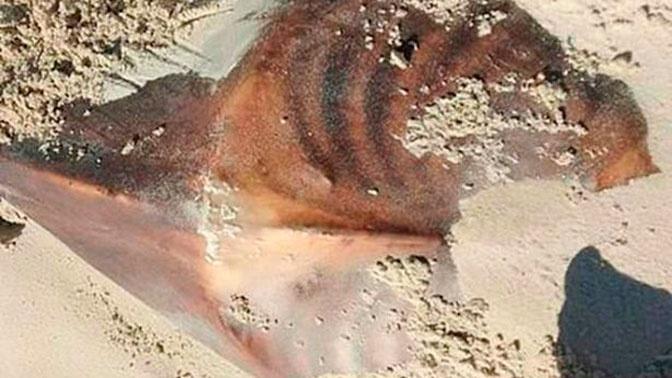 Чужой: тело неизвестного существа испугало туристов в Австралии