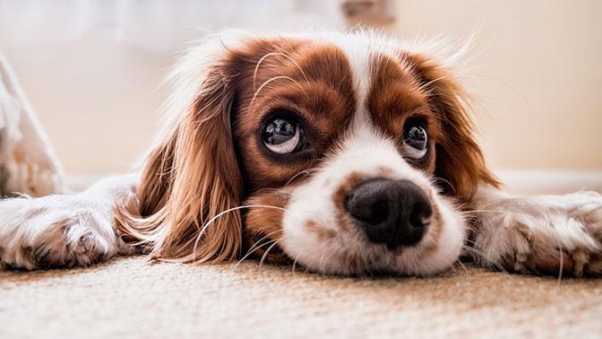Кинолог объяснил, как правильно кормить собак