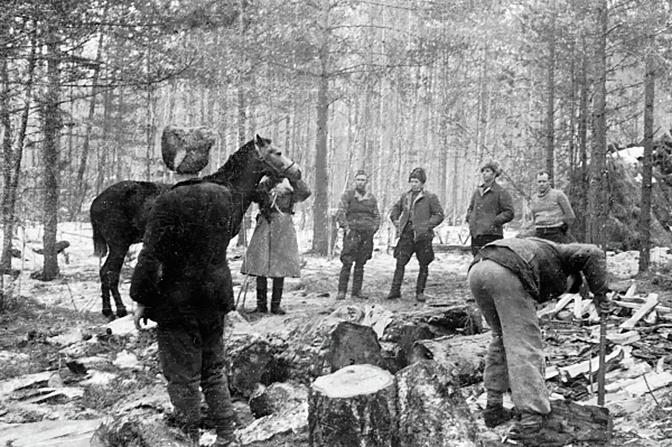 Ветеринарный врач осматривает верховую лошадь командира партизанского отряда Дмитрия Медведева в лесу под Ровно