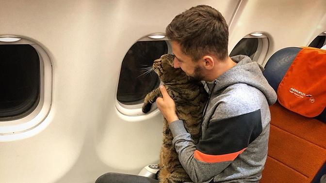 В Москве мужчину не пустили в самолет из-за слишком толстого кота