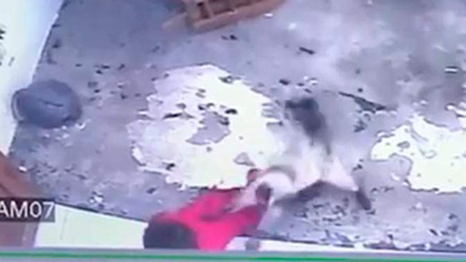 Усатый нянь: кот спас ребенка и стал героем Сети