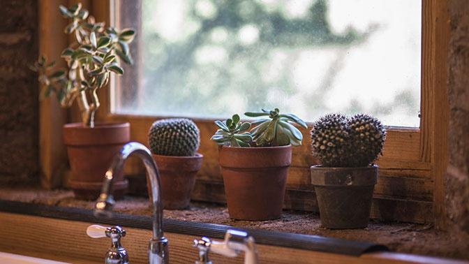 Флорист рассказала об опасных для дома растениях