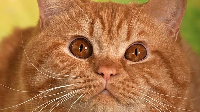 В Крым на поездах будут возить толстых котов