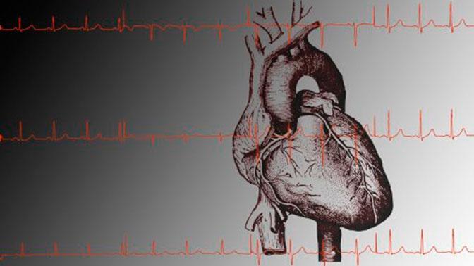 Кардиолог назвал простые правила для поддержания здоровья сердца