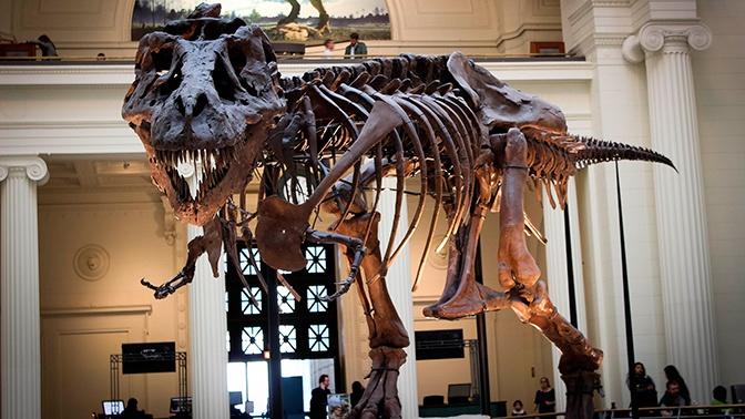 Ученые определили причину вымирания динозавров