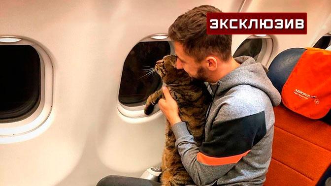 Владелец не допущенного к полету «толстого» кота прокомментировал гибель кошек в Шереметьево