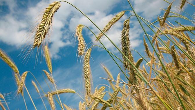 В Германии назвали невероятным подъемом ситуацию с российским сельским хозяйством
