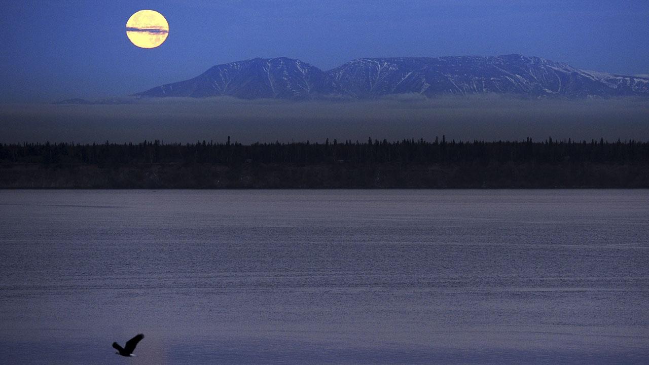 Последняя тайна Аляски. По следам украденных документов