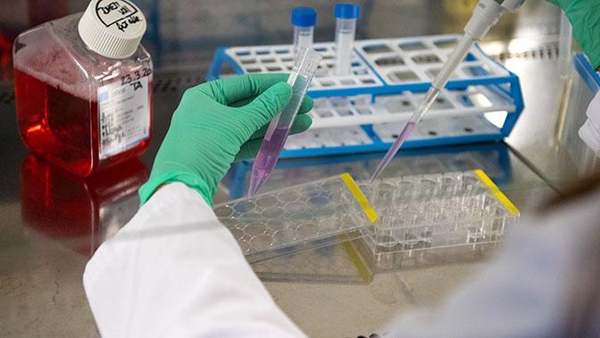 Вирусолог рассказала, у кого формируется пожизненный иммунитет к коронавирусу