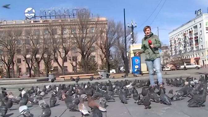 Обезумевшие от голода голуби окружили корреспондента «Звезды» в Хабаровске